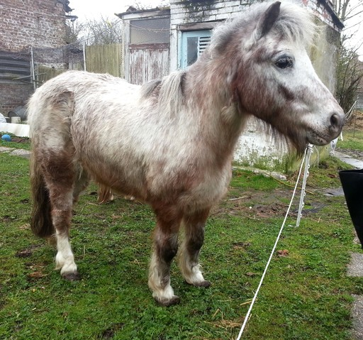 poney a adopter