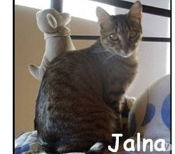 Jalna, Chat à adopter