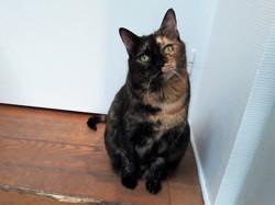Groseille, Chat à adopter