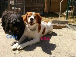 Cata, Chien caniche à adopter