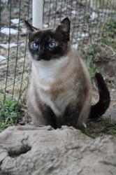 Deesse, Chat à adopter