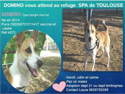 Domino, Chien à adopter