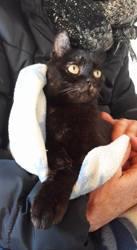 Lancia, Chat à adopter
