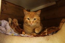 Nougat, Chat à adopter
