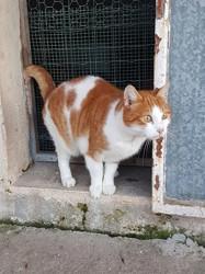 Caramel, Chat européen à adopter