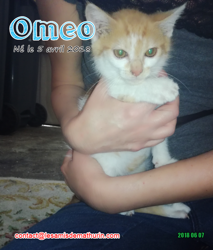Omeo, Chaton à adopter