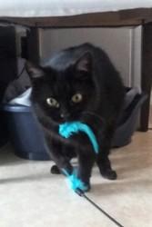 Cracotte, Chat européen à adopter