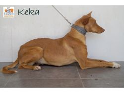 Keka, Chien à adopter