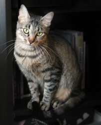Laika, Chat  à adopter