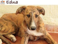 Edna, Chiot à adopter