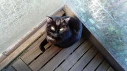 Cosette, Chat à adopter