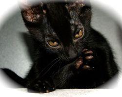 Onyx, Chaton à adopter