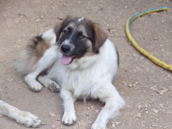 Mickey, Chien à adopter