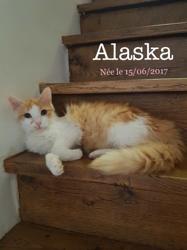 Alaska chat