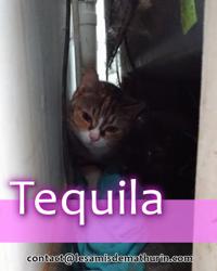 Tequila de montereau, Chat à adopter