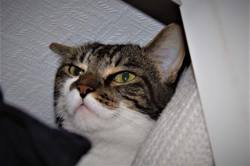 Bambou, Chat à adopter