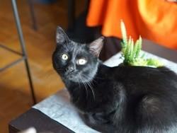 Jungle, Chat à adopter