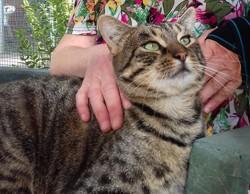 Vinius les beaux yeux, Chat à adopter