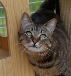 Petie, Chat gouttière à adopter
