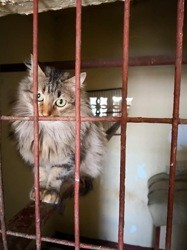 Valkiria, Chat à adopter