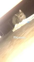 Picasso, Chat à adopter