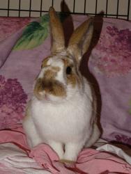 Taggada, Animal à adopter