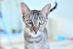 Gilberta, Chat à adopter