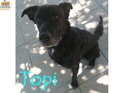 Topi, Chien à adopter