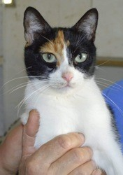 Poppy, Chat à adopter