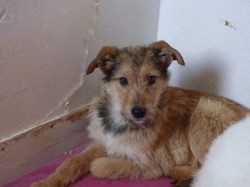 Sybil, Chiot à adopter