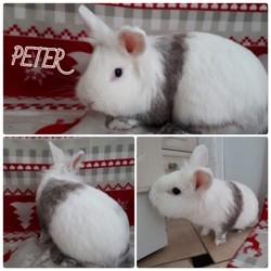 Peter, Animal à adopter
