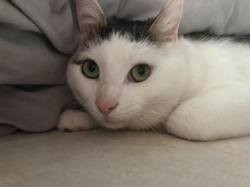 Melo, Chat à adopter