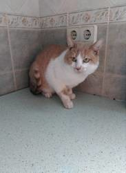 Heminwey, Chat à adopter
