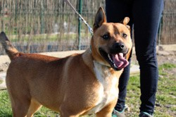 Pedro, Chien à adopter