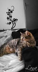 Lana, Chat à adopter