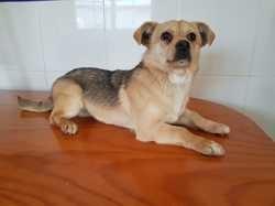 Cromo adopté, Chien chien courant espagnol à adopter