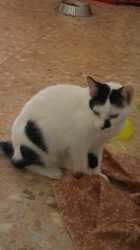 Olga, Chat à adopter