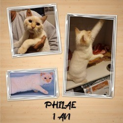 Philae, Chat européen à adopter