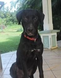 Ixo, adorable chien croisé non lof, Chien à adopter