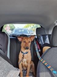 Balboa, Chiot à adopter
