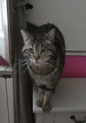 Billy, Chat à adopter