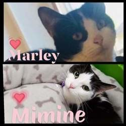 Mimine et marley, Chat à adopter