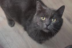 Mr'chat, Chat européen à adopter