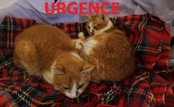 Isa & elsa, Chat à adopter
