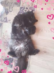 Minerva, Chat à adopter