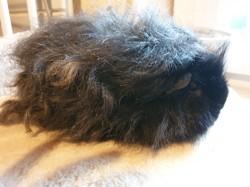 Frisette et stouffe, Animal à adopter