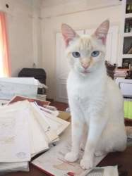 Terry, Chat à adopter