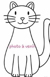 Gribouille, Chat européen à adopter