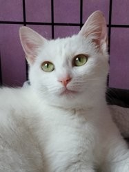 Anna, Chat à adopter
