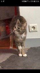 Sofia, Chaton à adopter